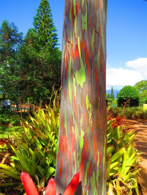 Where is your favorite tree? – KMB Travel Blog