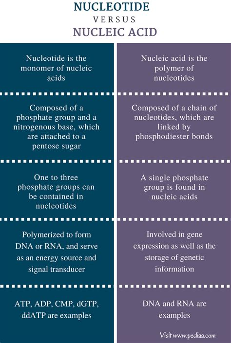 Difference Between Nucleotide and Nucleic Acid – Pediaa