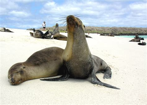 Galapagos Islands Vacations 2020 & 2021 - Tailor-Made from