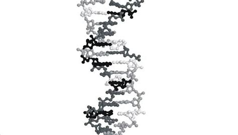 What Are the Four Nitrogenous Bases of DNA? | Sciencing